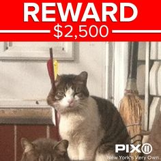 Reward offered in case of feral cat shot in the face with arrow http://via.pix11.com/L8qYK