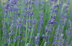 11 Herbs Every Gardener Should Try to Grow This Summer   Fox News