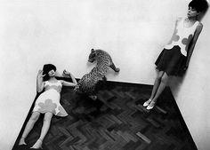 Helmut Newton, 1966.  #cheetah #blackandwhite #60s