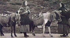 Women knitting on their way to market, Shetland