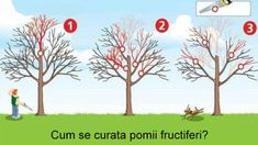 curatarea pomilor Vertical Garden Diy, Tree Pruning, Design Case, Patio, Fruit Trees, Grape Vines, Bonsai, Pergola, Exterior
