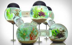 Five Bowl Aquarium