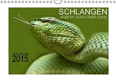 SCHLANGEN - JÄGER MIT GESPALTENER ZUNGE (Wandkalender 2015 DIN A4 quer): Für das Projekt Schlangen reiste der Fotograf Axel Hilger auf langen ... Bildmaterial. (Monatskalender, 14 Seiten) von Axel Hilger http://www.amazon.de/dp/3664067118/ref=cm_sw_r_pi_dp_Lbwjvb14Y3GXM