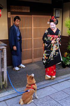 多麻・まめ藤さん お見世出し(祇園甲部) : 花景色-K.W.C. PhotoBlog