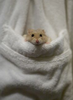 Is that a hamster in your pocket or are you just happy to see me? hehehe