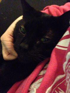 Catsis Cat | Pawshake