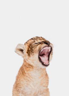 « Sleepy Leopard » par Paws & Claws | #Animaux #Artpourenfants #Léopards #Animauxsauvages #Marron #JUNIQE | Plus daffiches sur www.juniqe.fr Lion Cub, Cubs, Fox, Poster, Illustration, Animals, Homeschool, Kid Friendly Art, Wild Animals