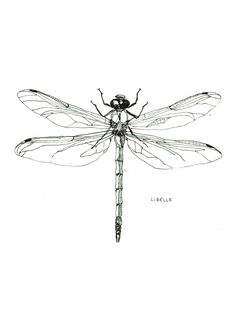 tattoo designs 2019 10 scribbly insects on postcards tattoo designs 2019 Libelle – Dragonfly pendrawing by Maartje van den Noort tattoo designs 2019 Dragonfly Drawing, Dragonfly Images, Dragonfly Tattoo Design, Dragonfly Art, Tattoo Designs, Art Designs, Tattoo Drawings, Body Art Tattoos, Sleeve Tattoos