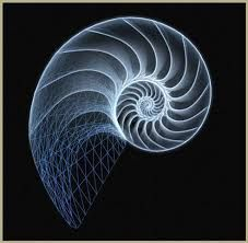 Image result for fibonacci community