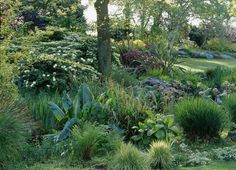 Beth Chatto - small hillside planting