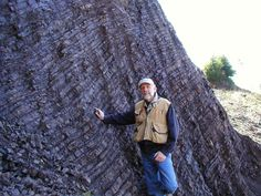 Deep-water turbidite deposits: alternating thin layers of siltstone & mudstone originally deposited as silt & mud on the abyssal plain, then dragged down into the earth in a subduction zone, then uplifted. Lobster Creek Quarry, Gold Beach, OR (BGC Principal Bob Busch)