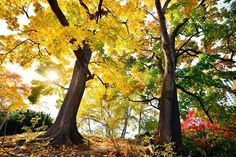 TIM FRANKLIN PHOTOGRAPHY — #tbt to #fall #colors in #Hokkaido #travel #japan...