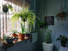Instagram bathroom pinterest piante da bagno verde e piante