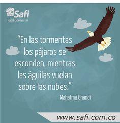 Esta semana no importan cuantas crisis se vengan, seamos como águilas volando encima de ellas #FelizLunes #Pymes. Ingresa ahora : www.safi.com.co