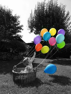Nice picture with balloons tied to a basket. Nice Picture, Cool Pictures, Balloons, Basket, Balloon, Hamper
