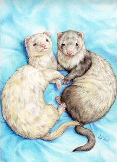 Animals And Pets, Baby Animals, Cute Animals, Ferret Tattoo, Cute Animal Drawings Kawaii, Cute Ferrets, Animal Sketches, Cute Animal Pictures, Otters