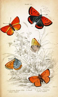 the last door down the hall: Butterfly Freebies... Free butterfly pages that might be fun for art journaling!