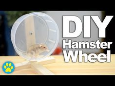 DIY Hamster Wheel | #DIYJuly - YouTube
