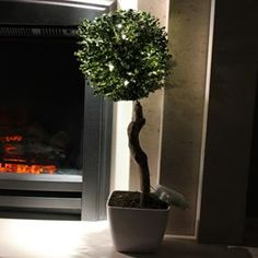 This Pre Lit Potted Topiary Ball Tree comes with Warm White LED's, and looks perfect in any room or conservatory. This wonderful tree can be enjoyed during both the day and night. #gardenandhomeshop #barnsley #garden #home #decoration #topiary #light #led #warmwhite #indoor #plant #tree