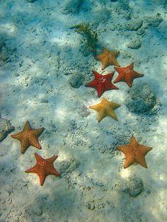 Wonderful Starfish Under Water