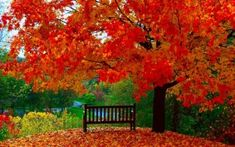 Autumn fall time forest bench personalized poster wall art Home Decor USA made