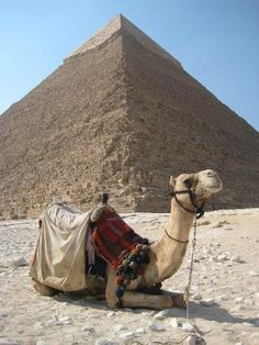 Cairo Photo - Camel by the pyramid of Kephren. So cute! Camels amaze me!