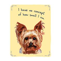 Yorkie Truth