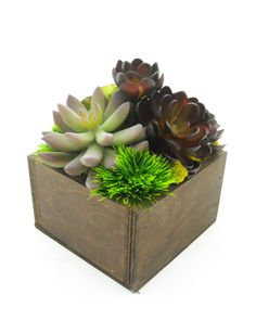 succulent dish garden ideas succulent dish garden with a garden creature by sosucculent succulent gardens pinterest gardens garden ideas and dishes