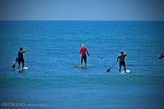 paddle surfers