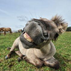 Goede week gewenst allemaal! Dit vrolijke Konikpaard is vastgelegd door Tilly Meijer #Fotowedstrijd #Natuurmonumenten