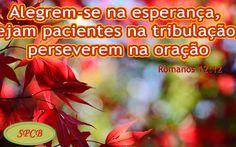 Salmos - Proverbios e passagens da Bíblia: O AMOR (Romanos 12:9-21)