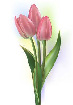 一枝郁金香 Pink Tulips, Tulips Flowers, Botanical Flowers, Exotic Flowers, Beautiful Flowers, Tulip Flower Drawing, Watercolor Flowers, Flower Art, Garden Fence Art