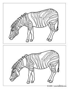 zebra jpg