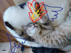 For Mothers of Cats, Dogs, & Dragons: Game of Thrones Pet Names