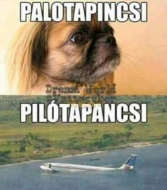 Humor in Hungarian Wtf Funny, Funny Cute, Funny Jokes, Hilarious, Funny Animal Pictures, Funny Photos, Funny Animals, W Two Worlds, Christian Humor