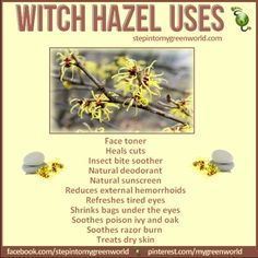 Witch Hazel is something everyone should have in their medicine cabinet. Discover the top 10 uses for witch hazel. Witch Hazel Uses, Witch Hazel For Skin, Witch Hazel Toner, Homemade Skin Care, Diy Skin Care, Skin Care Tips, Homemade Beauty, Natural Sunscreen, Natural Deodorant