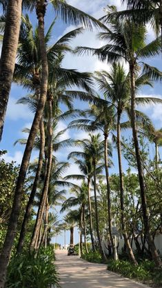 23 Ideas For Palm Tree Wallpaper Backgrounds Tropical Tree Wallpaper Backgrounds, Natur Wallpaper, Phone Backgrounds, Phone Wallpapers, Wallpaper Samsung, Summer Wallpaper, Trendy Wallpaper, Tropical Wallpaper, Aesthetic Backgrounds