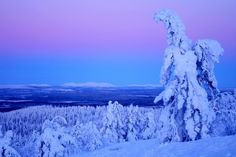 A winter scenery, Finnish Lapland