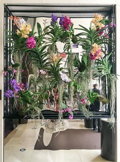 Orchids in the entry of the Mandarin Oriental hotel in Paris one of the city's best luxury hotels.
