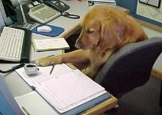 The Dog Who Loathes Paperwork. | 8 Adorable Animals That Would Love To RescueYou