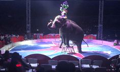 . Please urge the Heath Moundbuilders Kiwanis Club to adopt a policy against using any animal-based entertainment to raise funds in the future.
