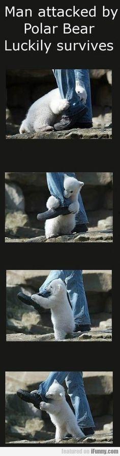 """""""Hombre atacado por un oso polar afortunadamente sobrevive"""""""