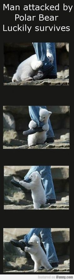 Polar bear attack.