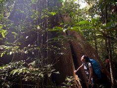 Amazon Rainforest Photos | Photos of Amazon Tours in Brazil - Big Tree Adventure Tours