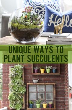 Unique Ways to Plant Succulents