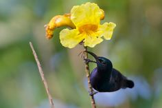 Purple Sunbird by Chandrashekar Badami on 500px