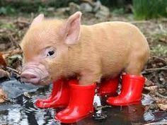 Lil' piggy