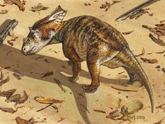A juvenile Chasmosaurus belli found in Alberta, Canada.