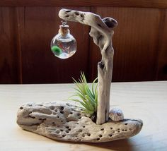SALE Driftwood Live Marimo Ball Air Plant Zen Ecosphere by MyZen, $45.95