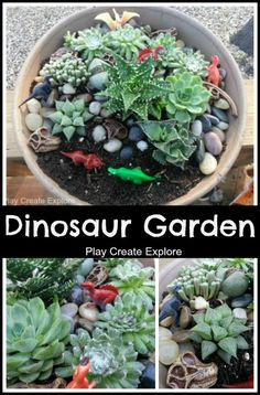 Miniature Dinosaur Garden from @April Cochran-Smith Gerald Create Explore.  You will need a large ceramic pot, some amazing and unique succulents, regular potting soil, plastic dinosaur fossil skulls, and plastic dinosaurs.